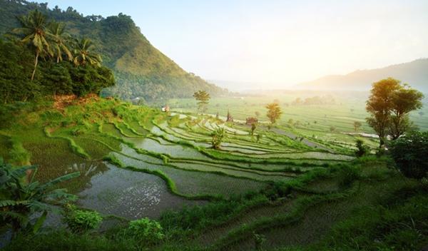 Kota Ubud Bali yang Mementramkan Hati