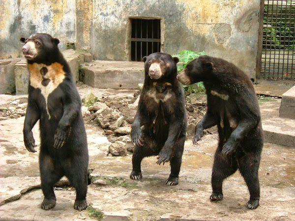 Kebun Binatang Medan