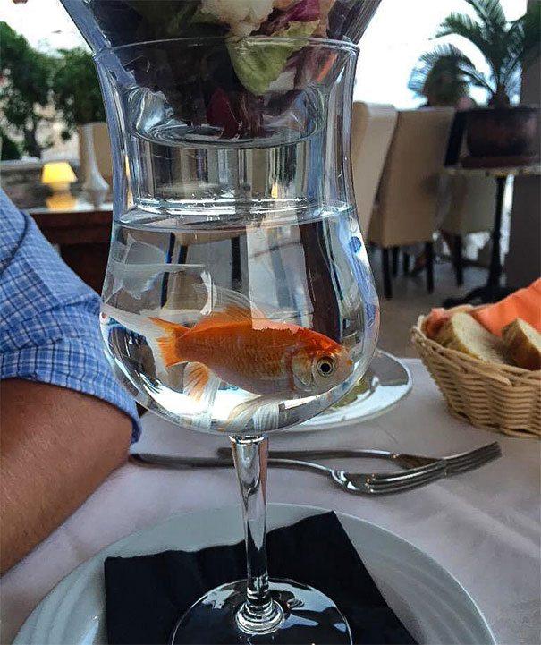 makanan unik di atas gelas ikan mas