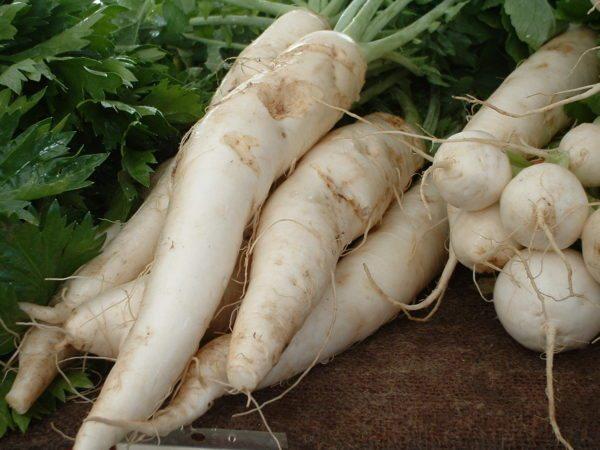 manfaat lobak bagi kesehatan