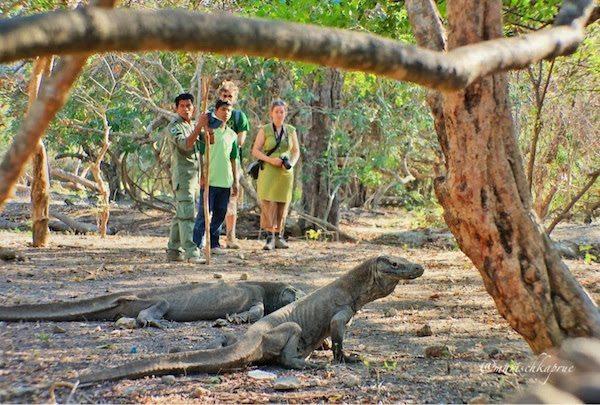 liburan ke Pulau Komodo