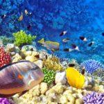 diving di Indonesia