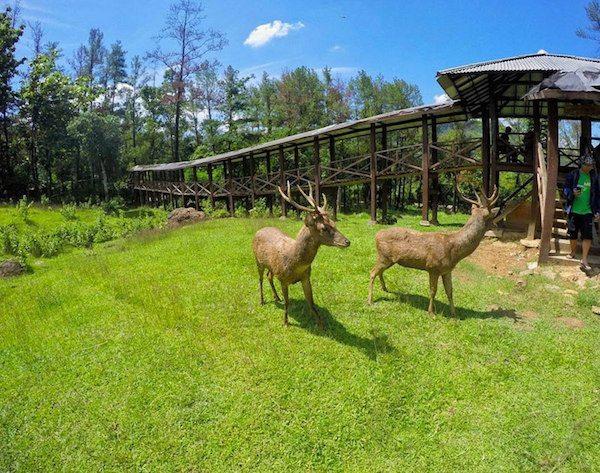 destinasi wisata keluarga di Bogor