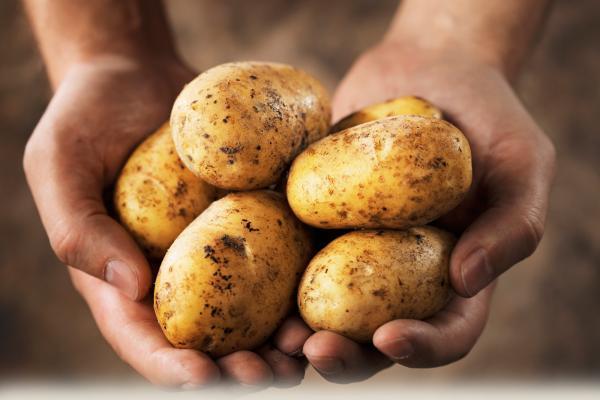 kentang manis