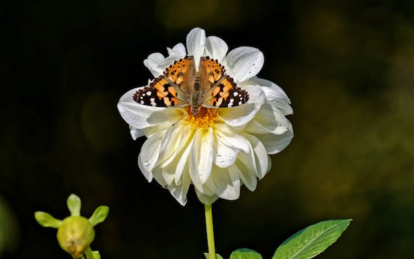 makna bunga melati
