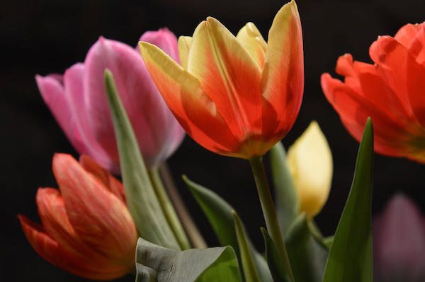 Selain Cantik dan Wangi Ternyata 12 Bunga  Ini Menyimpan