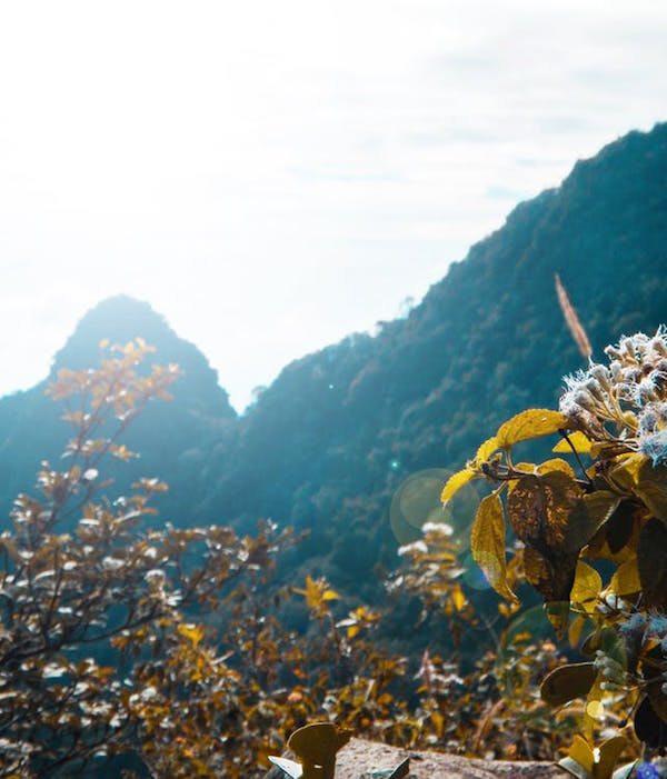 makna bunga edelweiss