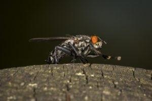 7 Kekuatan Tersembunyi Lalat