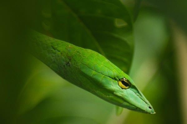 peruntungan shio ular 2019