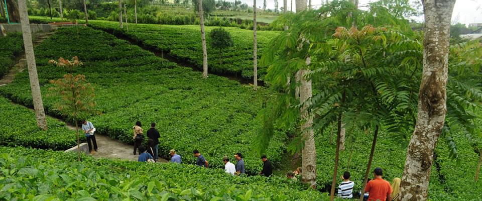 Tlogo Plantation salatiga