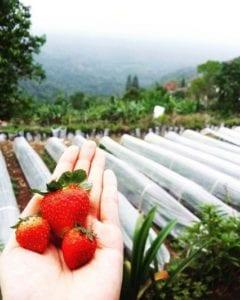 Bali Strawberry Farm Restaurant