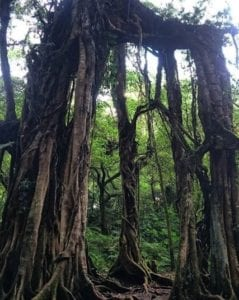 Kebun Raya Bali