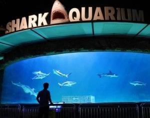 Ada apa aja di SeaWorld Ancol