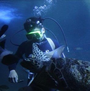 Memberi makan biota laut