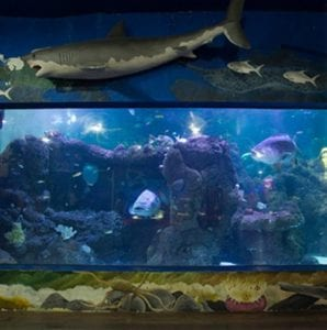 Mengenal ribuan biota laut di Main Aquarium