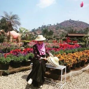 Kebun Begonia Glory