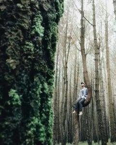Gardu Pandang Lereng Kelir Hutan Pinus Kayon