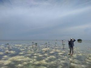 Pantai Bintang