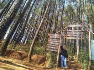 Alamat dan Akses ke Hutan Pinus Pengger