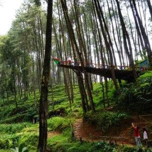 Hutan Pinus Sigrowong