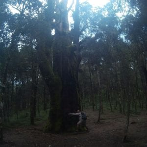 Hutan Walitis