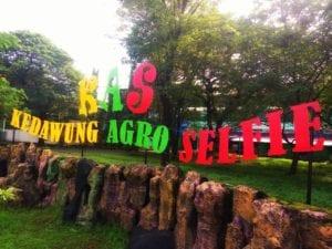 Kedawung Agro Selfie (KAS)