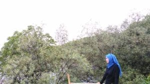 Hutan Mangrove Nguling
