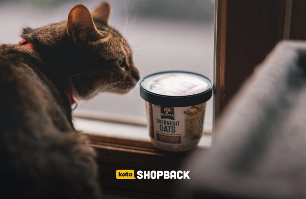 rekomendasi makanan kucing