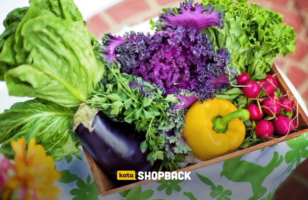 budidaya sayuran