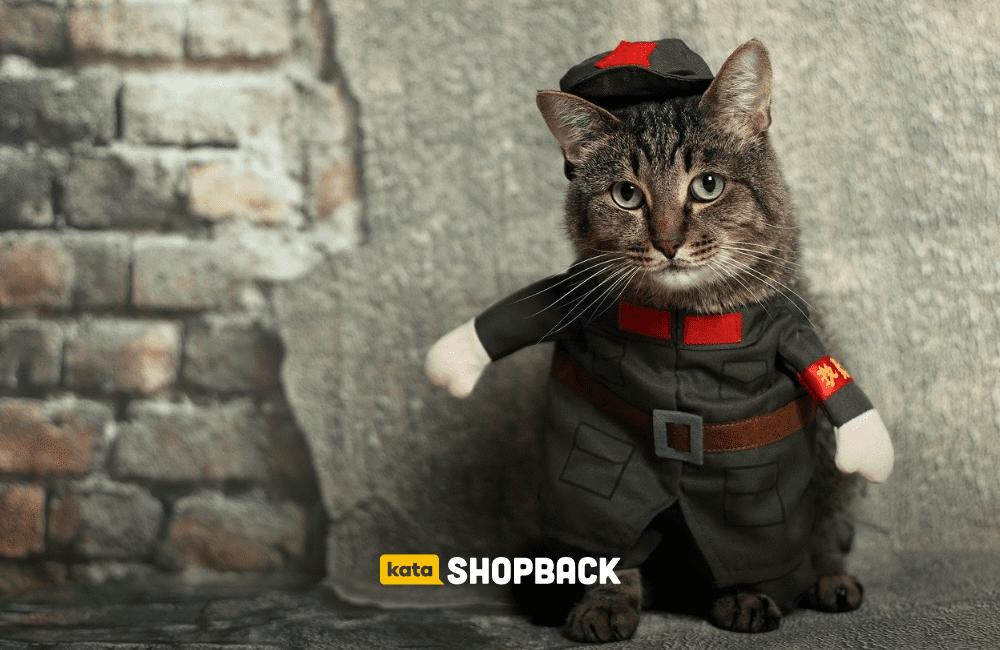 5 Potret Gokil Kucing saat Pakai Kostum