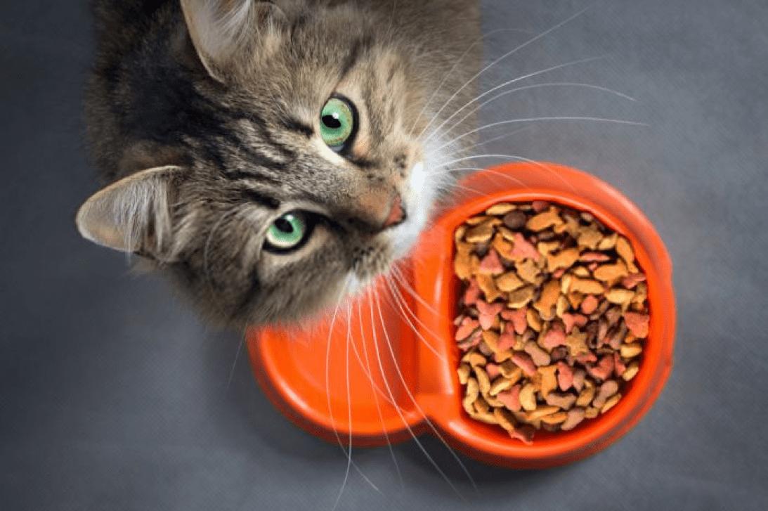 Mars Petcare, nutrisi hewan peliharaan