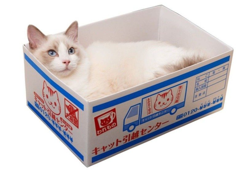 House Moving Box Cat Bed
