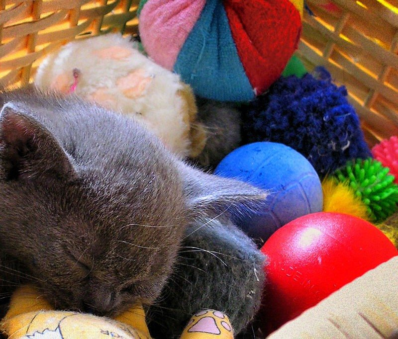 Cat and toys in basket