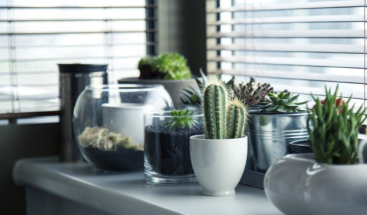 Bring The Outdoors Indoors With eBay