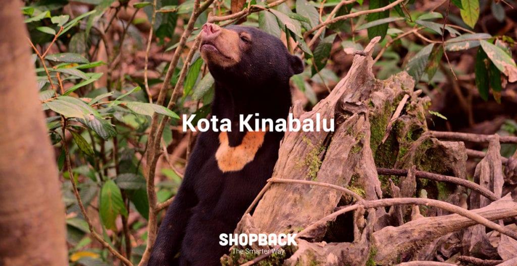 blog header bear kota kinabalu