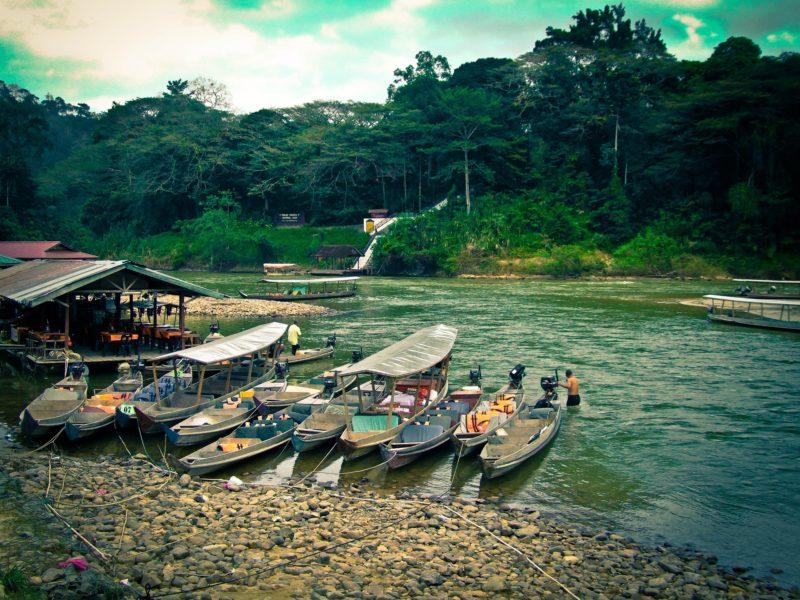 Taman Negara rainforest in Malaysia