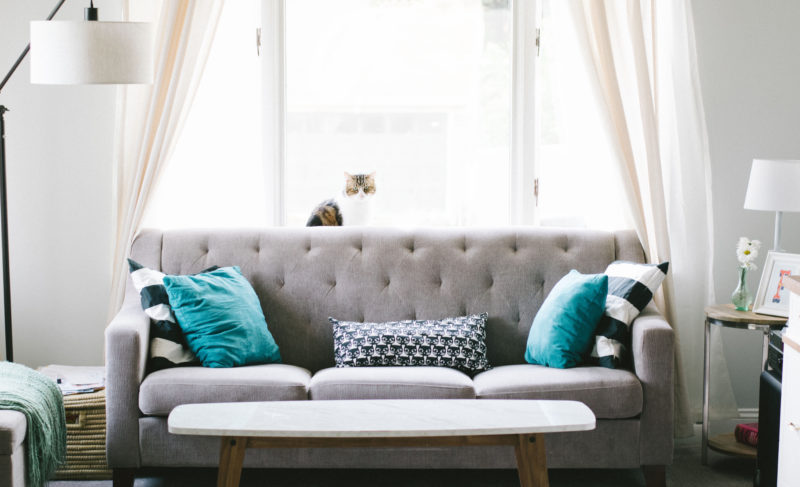 Cozy couch and cat perched on the top in a living room
