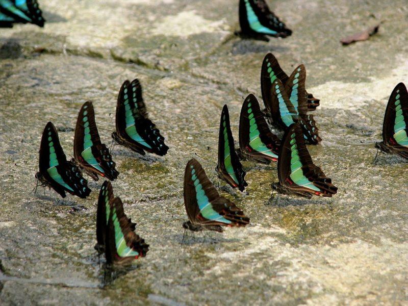 Malaysia, top tours, Kuala Lumpur, butterfly garden, parks