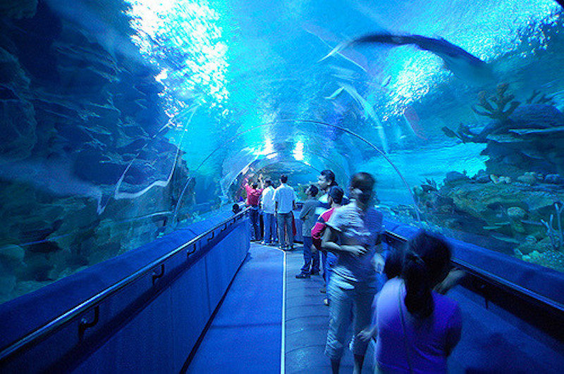 things to do in malaysia aquarium