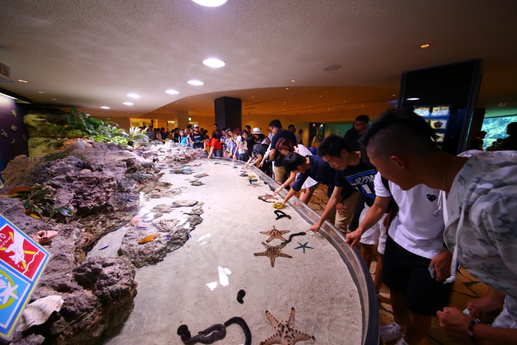 Touch pool at Churaumi aquarium with visitors