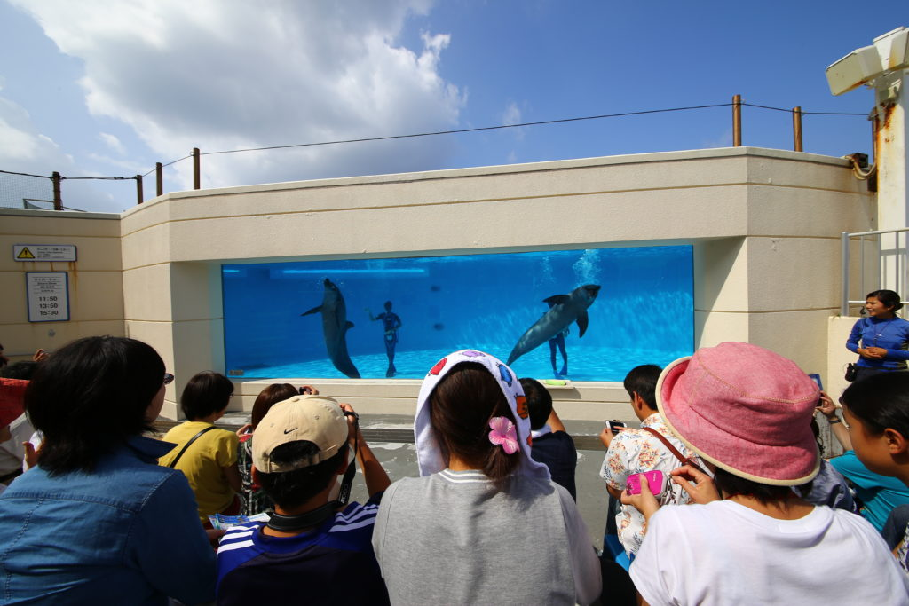 Visitors in front of the sea creatures exhibit