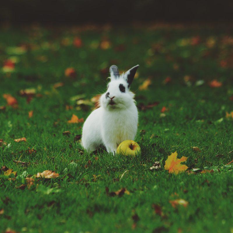 rabbit on field