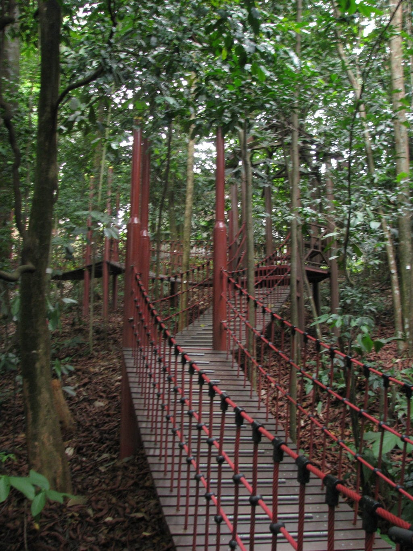 Suspension bridge at forest reserve