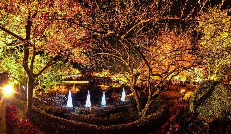 tokyo autumn night illumintion