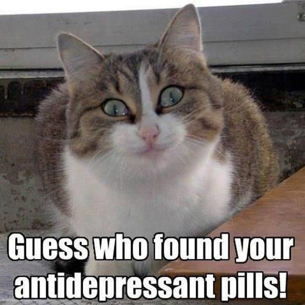 cat antidepressants