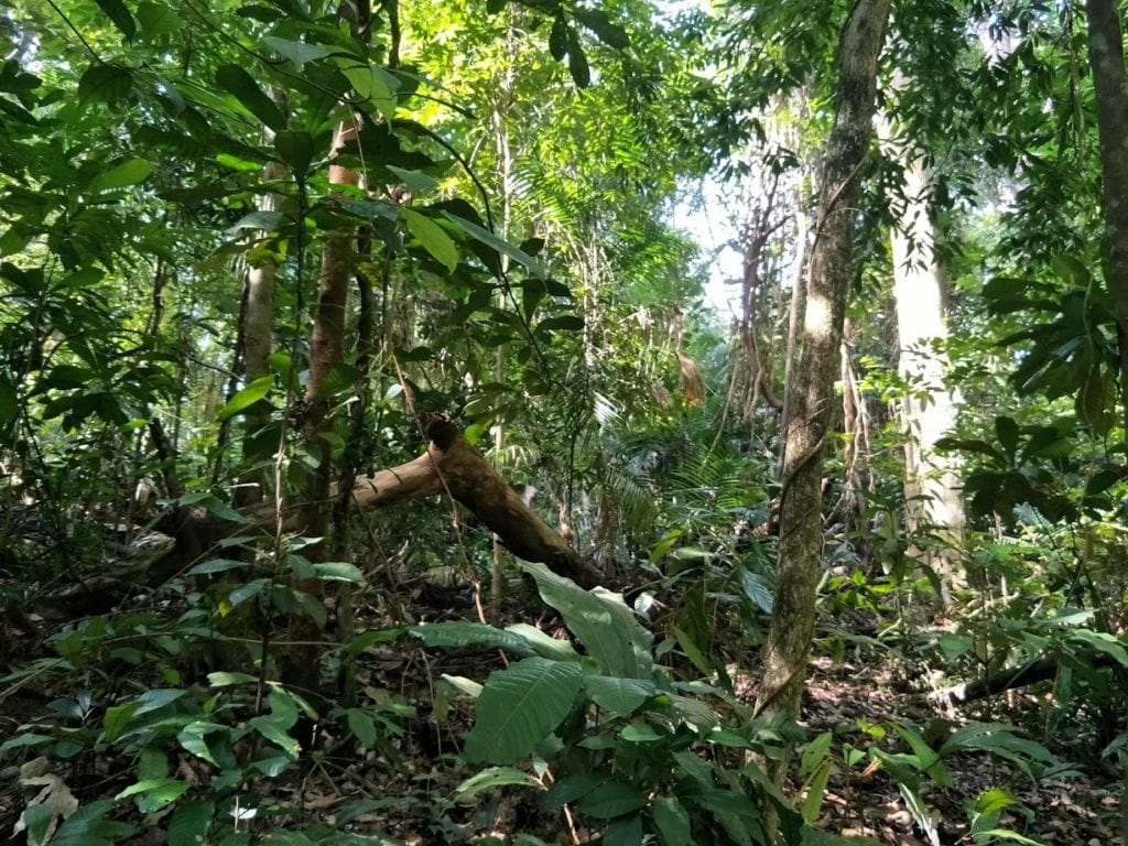 dense rainforest shrubs and trees