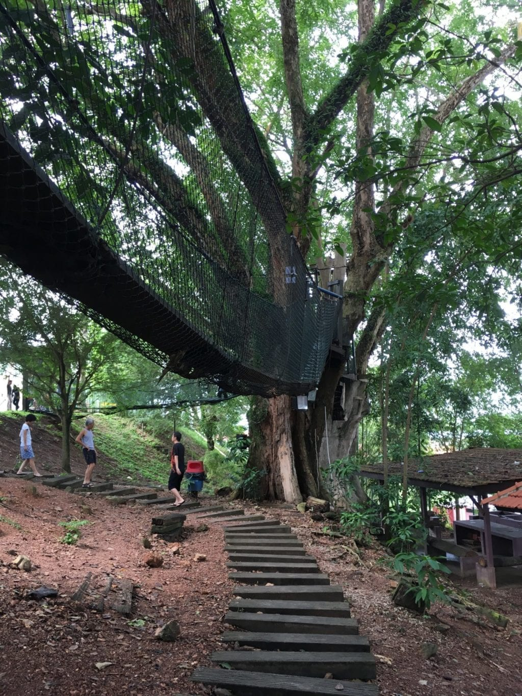 treetop bridge at the museum green park