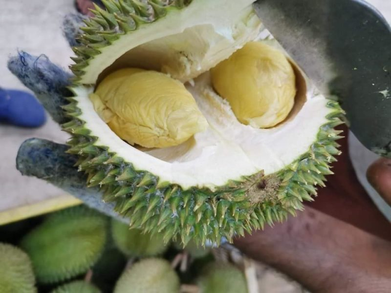 SS2 Durian