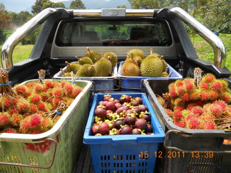 fruits in a pickup truck