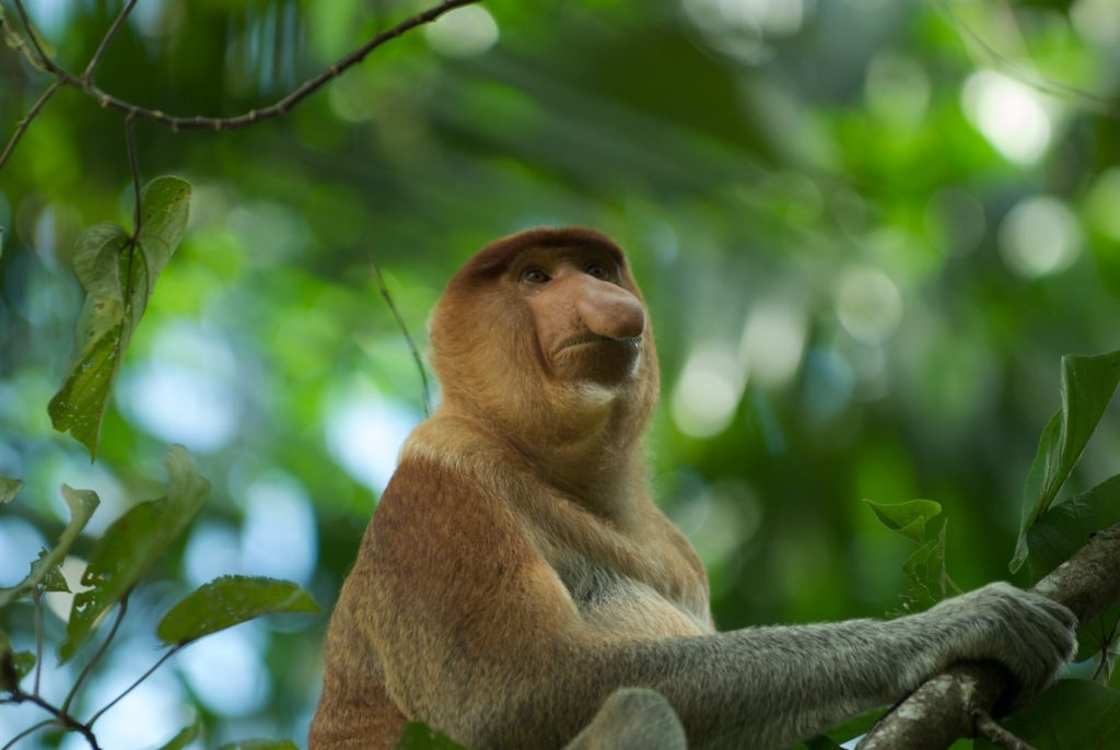 Monkey on tree looking up